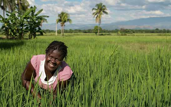 RICE FARMERS ASSURE NIGERIANS OF AFFORDABLE PRICE IN 2017