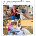 DJ Cuppy Shares pictures Of Her Pet Lion In Dubai (Photo)
