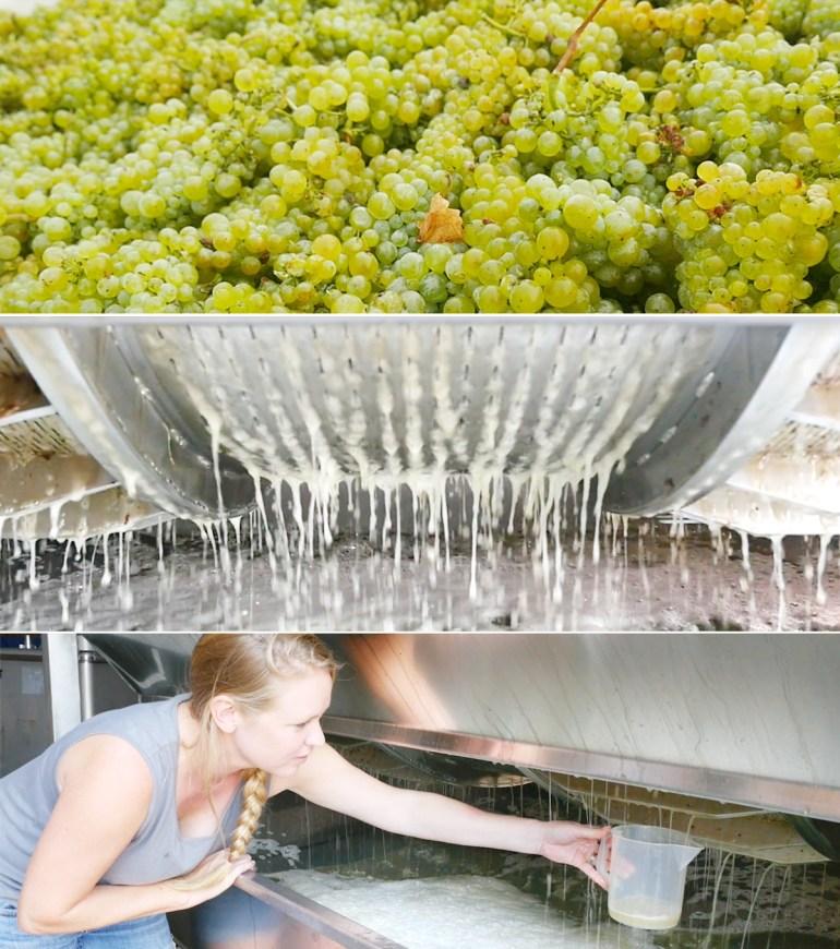 Pneumatic wine press white winemaking