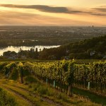A Soft-Spoken Winemaker Is Trying to Classify Austria's Vineyards in Record Time