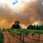 Ask Adam: What Does Smoke-Tainted Wine Taste Like?