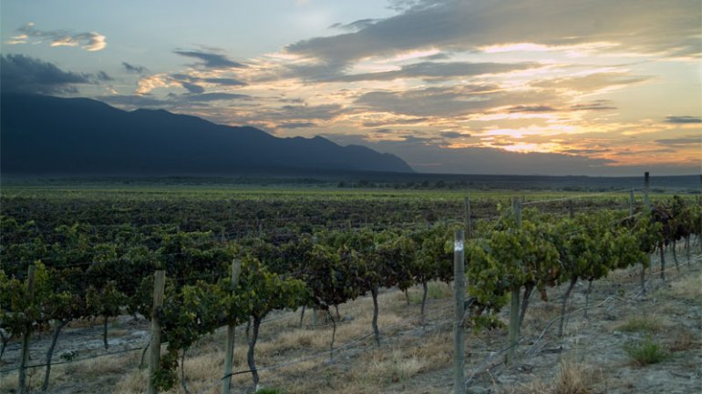 Bolivia is one of the best wine vacation destinations!