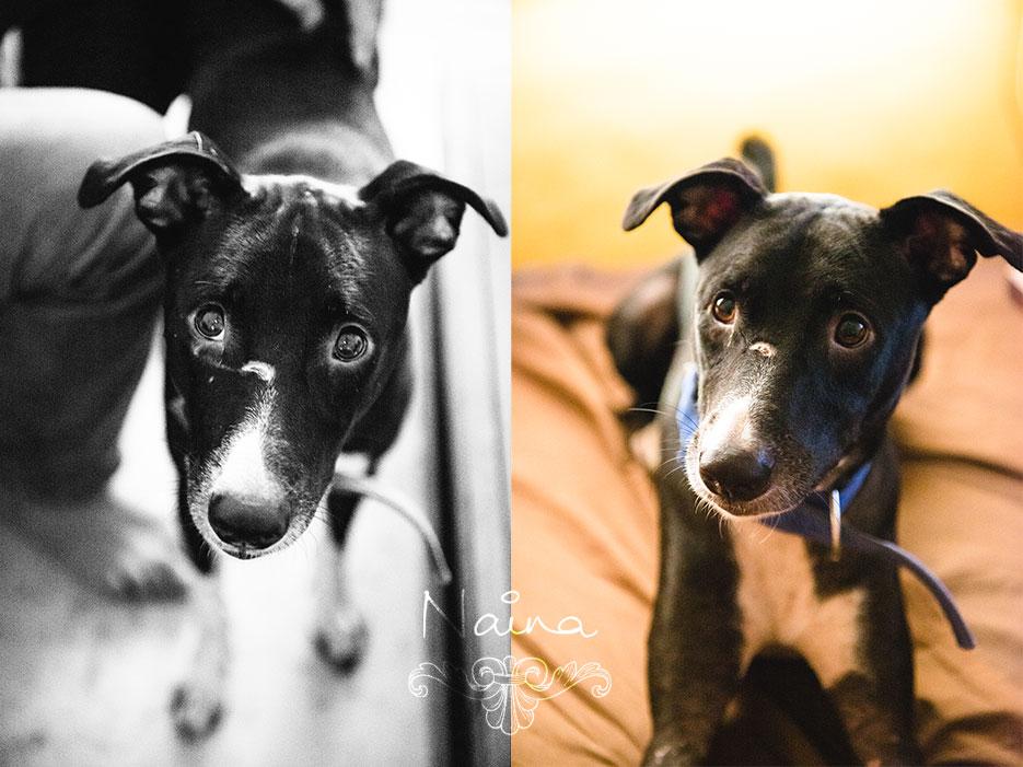 Veto, dog portrait. Animal portraiture photography by photographer Naina Redhu