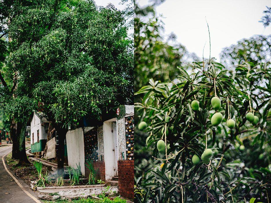 Naina.co-Photographer-Raconteuse-Storyteller-Luxury-Lifestyle-Dharchula-EyesForTravel-EyesForIndia-Old-Home