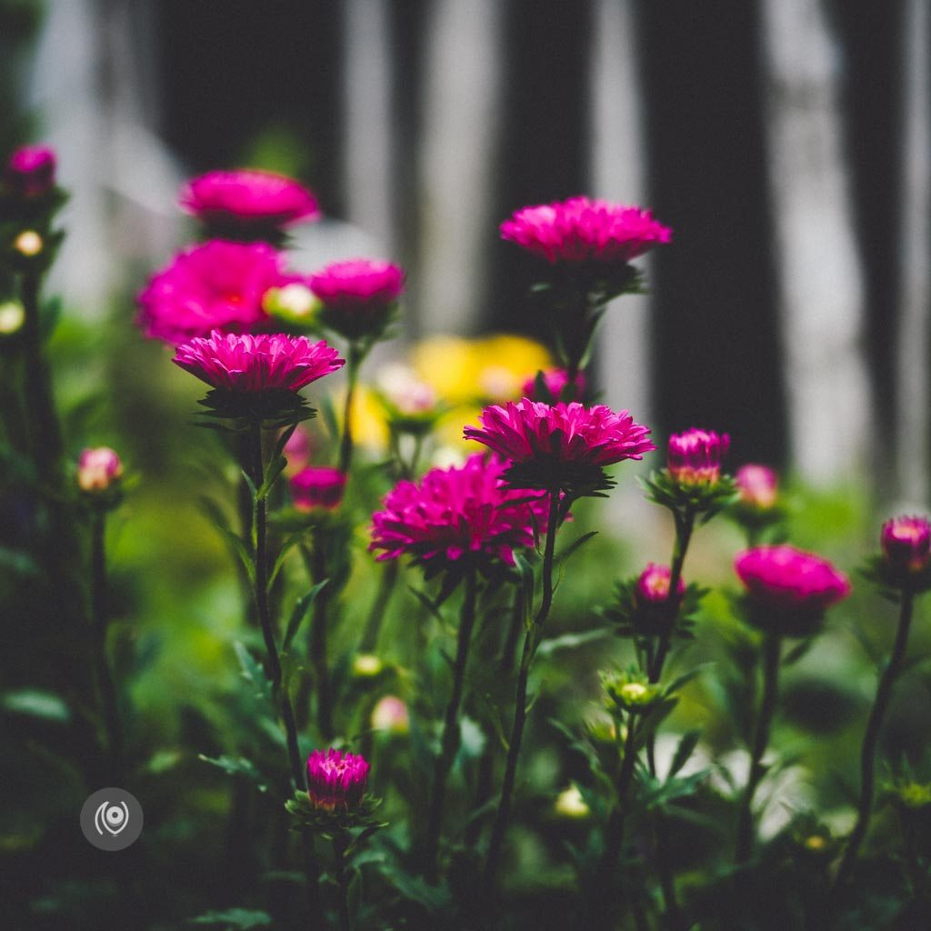 Greenery #REDHUxKASAULI #EyesForDestinations, Naina.co Luxury & Lifestyle Photographer, Blogger Storyteller