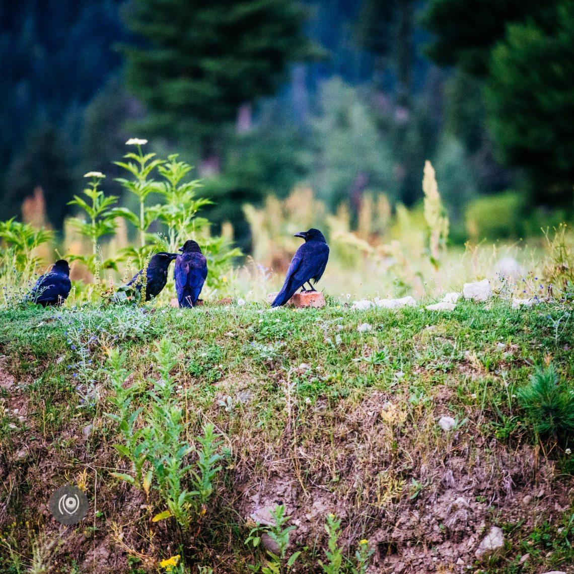 Ravens in Kashmir, EyesForDestinations, Travel, Naina.co Luxury & Lifestyle, Photographer Storyteller, Blogger.