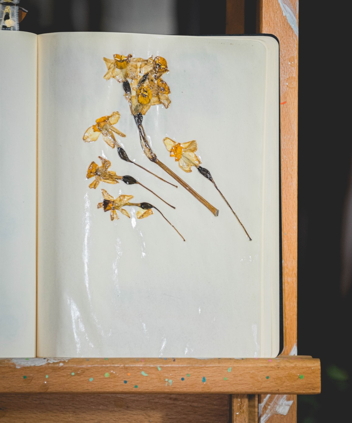 daffodils, still life photography, nargis, narcissus, flowers, art exhibit, friends, preserving flowers, dried flowers, flower art, artwork made of dried flowers