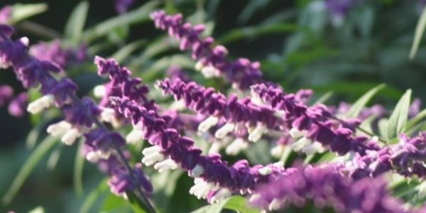 Naintal_Flowers