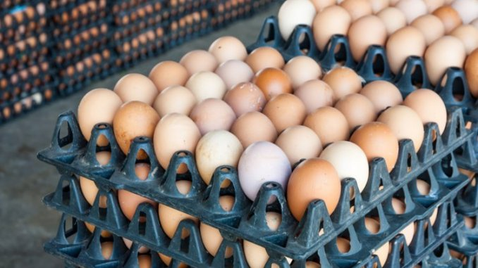 How to start eggs distributing business in Nigeria