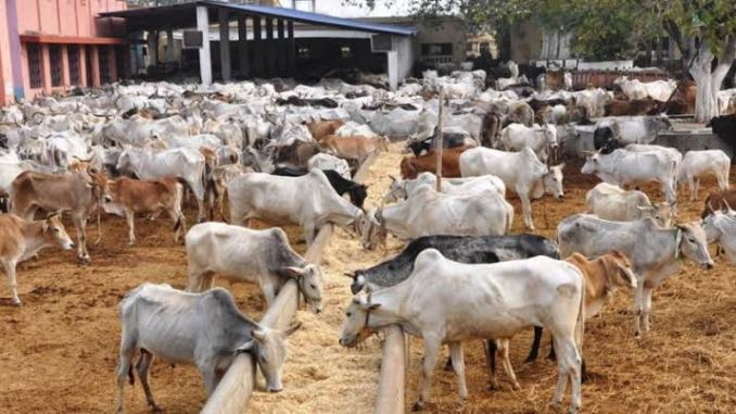 Cattle rearing business