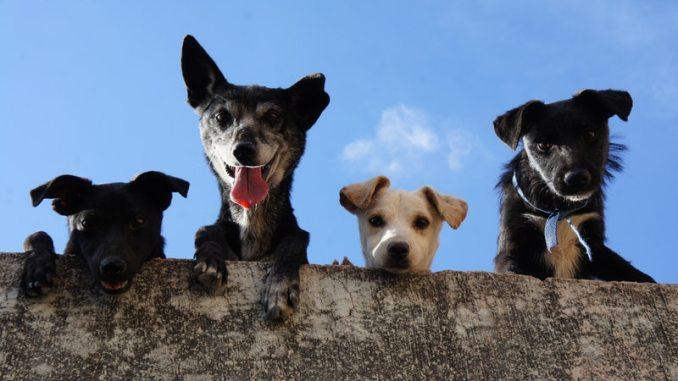 How To Start Dog Breeding Business In Nigeria