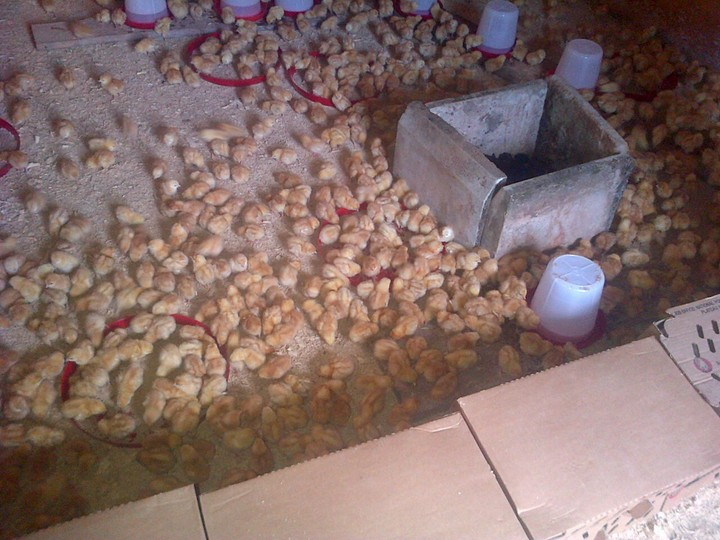 Starting A Poultry Farm A Blog Agriculture 82 Nigeria