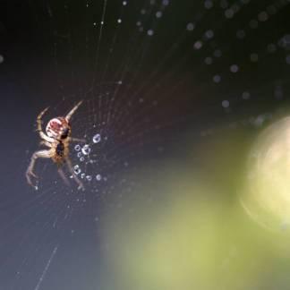 bsi kleefvallen voor spinnen