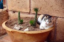 Katze macht Siesta