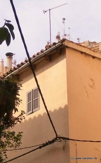 Die Dächer von Palma de Mallorca