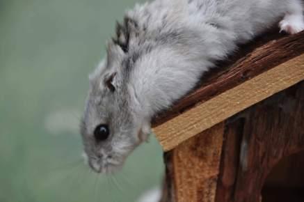 Wie heist die dating seiten mit hamster