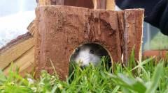 Hamsterbau im Gras
