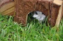 Höhle im Gras