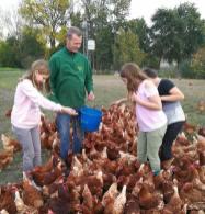 Hühnerfüttern für die Kinder