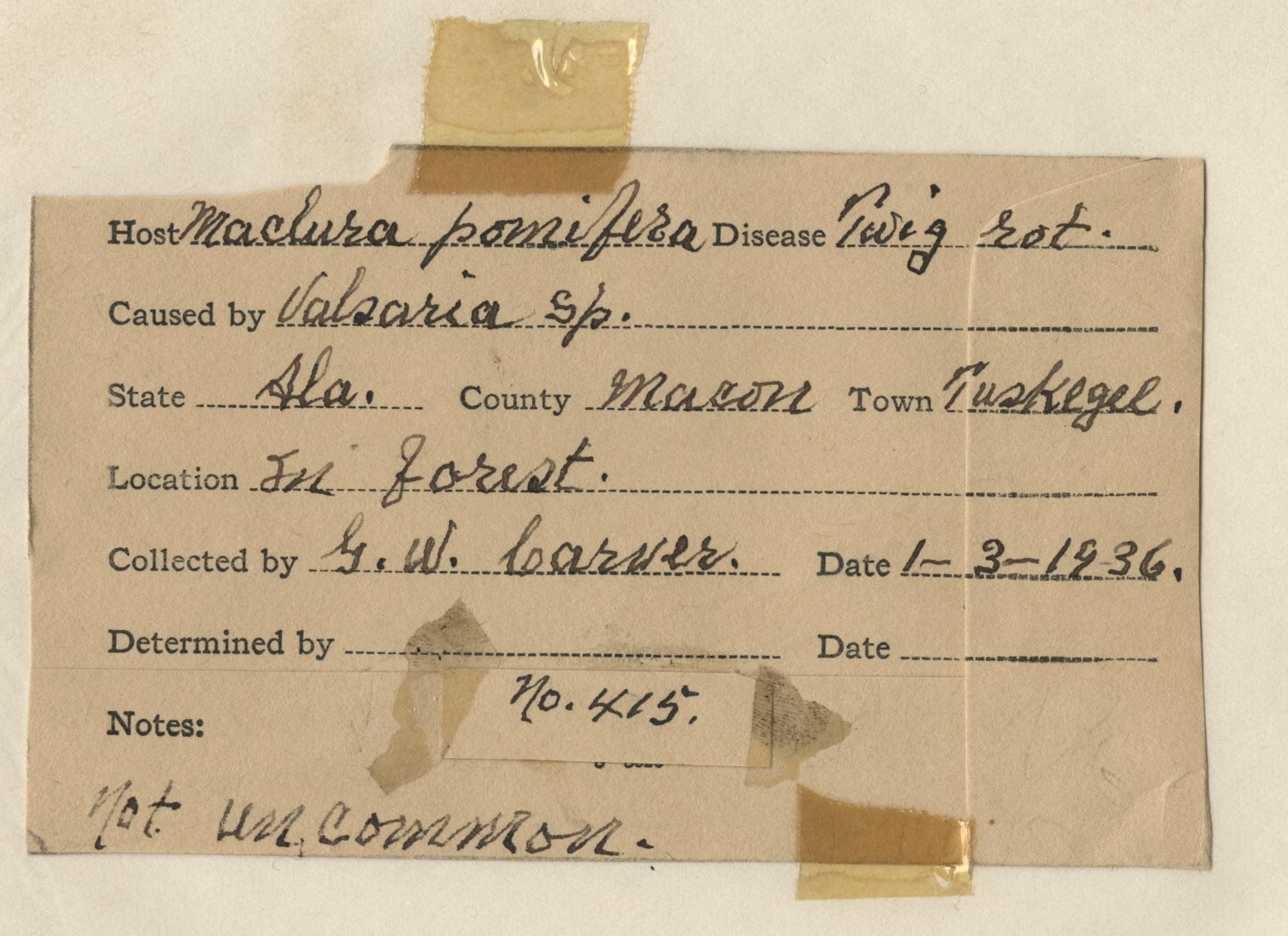 Handwriting Sample George Washington Carver Special