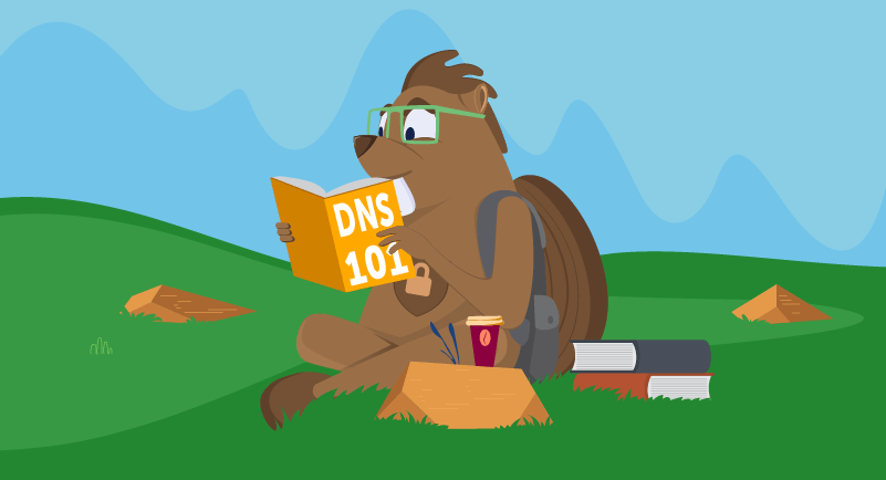 Beaver studying DNS information