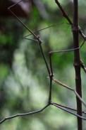 wildlife-laos-namet
