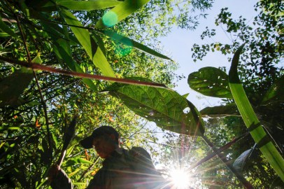 trek-laos-north-protected-forest