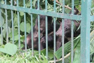 NEPL-NamNern-Free-bears-laos