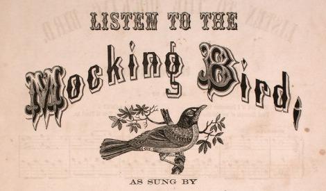 mocking bird, music, song,