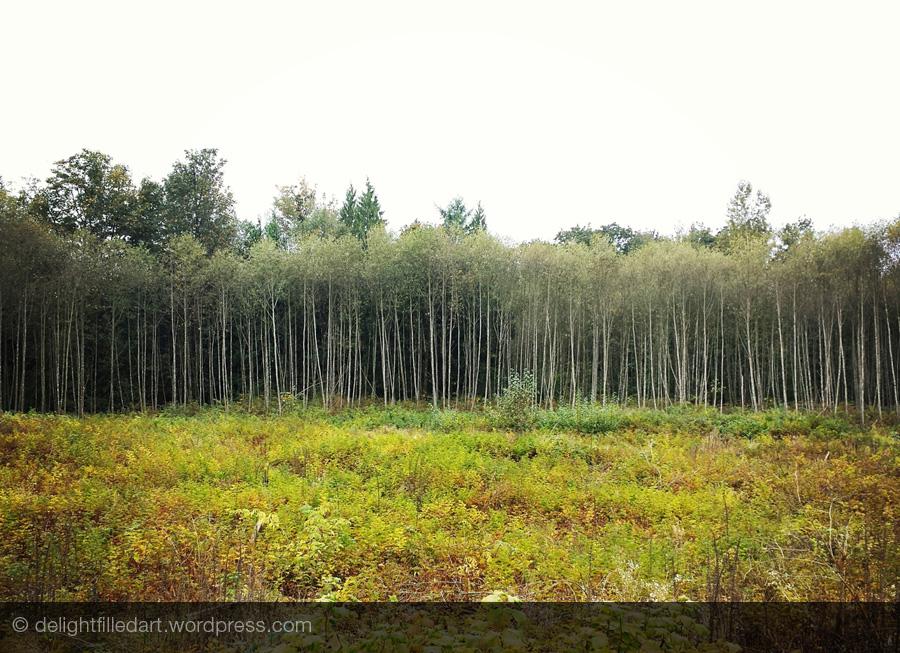 poplars inspiration