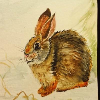 Bunny, 2016