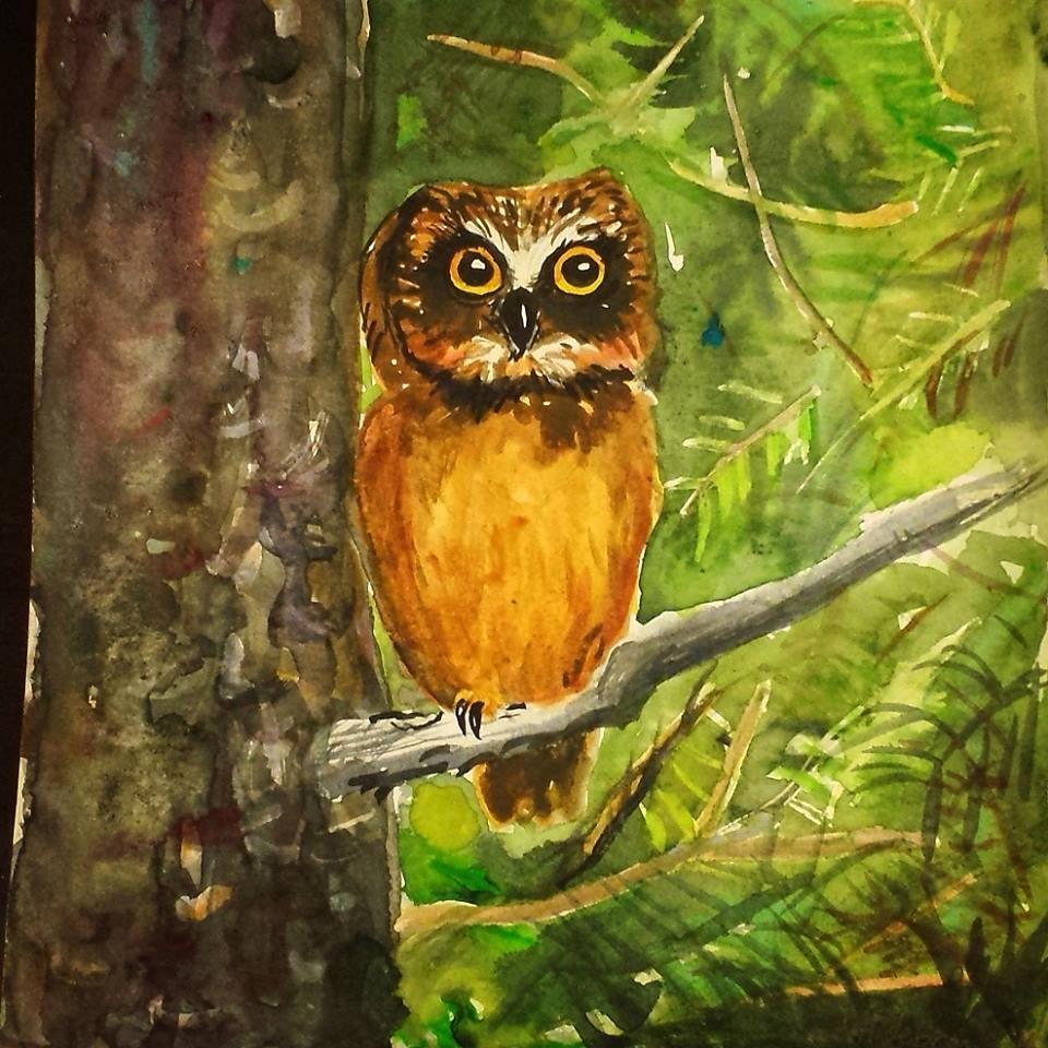 Owl, 2016