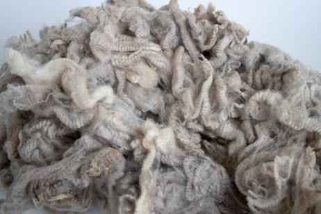 The raw Polwarth fleece before any washing. Isn't it wonderful, so clean.