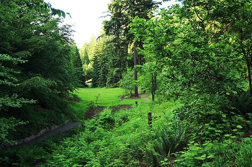 woody trails