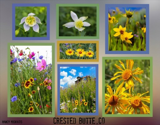 Mt CB Wildflowers-1_Fotor_Collage3