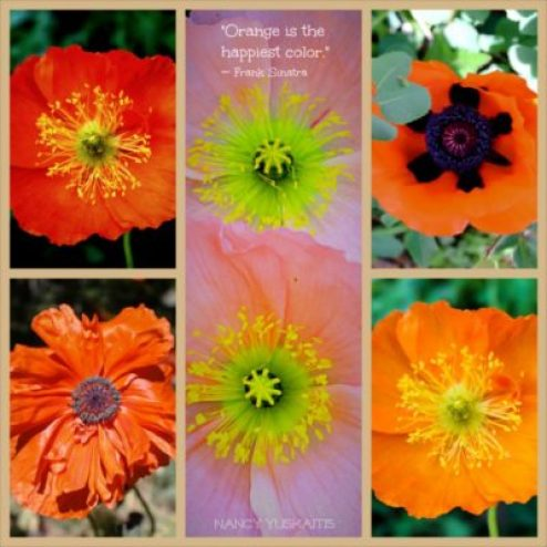 Happy Quote _Fotor_OJ PoppyCollage