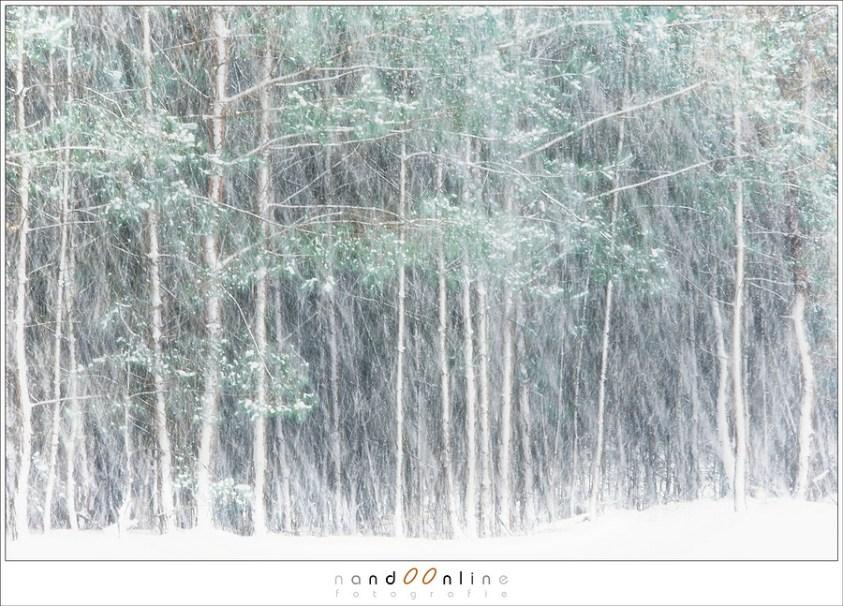 Fotograferen in een sneeuwbui