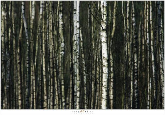 Vertikale lijnen in dit bos geeft een herhalend abstract patroon zonder een duidelijk rustpunt
