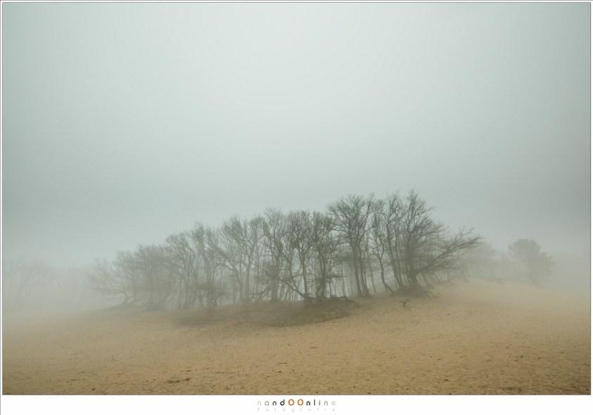 Zonsverduistering en mist. Een eiland van bomen in de mist.