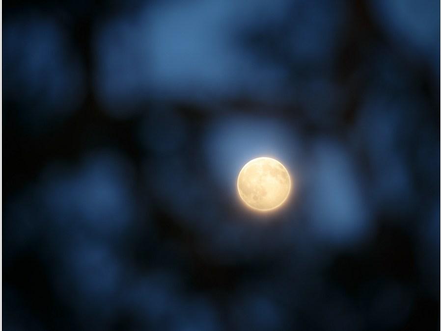 Volle Maan door de takken van een vliegden. De foto is te laat gemaakt: het was al te donker. Alleen door twee opnamen te combineren zijn nog wat details in de schijf te zien (400mm brandpunt)