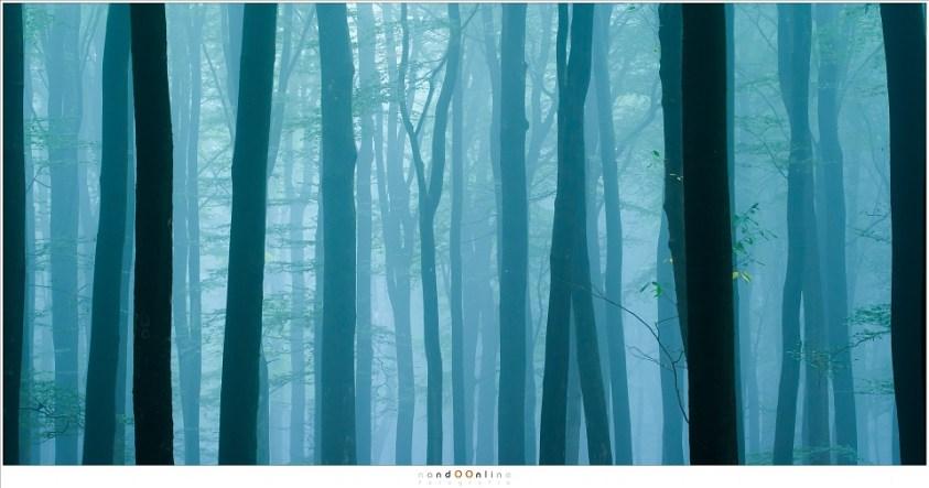De dansende bomen van het Speulderbos