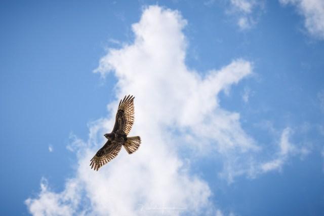 Het scherpstellen van een foto bij vliegende vogels kan het beste automatisch door de camera gedaan worden.