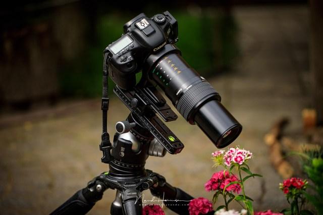 Extreme macro met de Canon MP-E65 betekent dichtbij komen. heel dichtbij