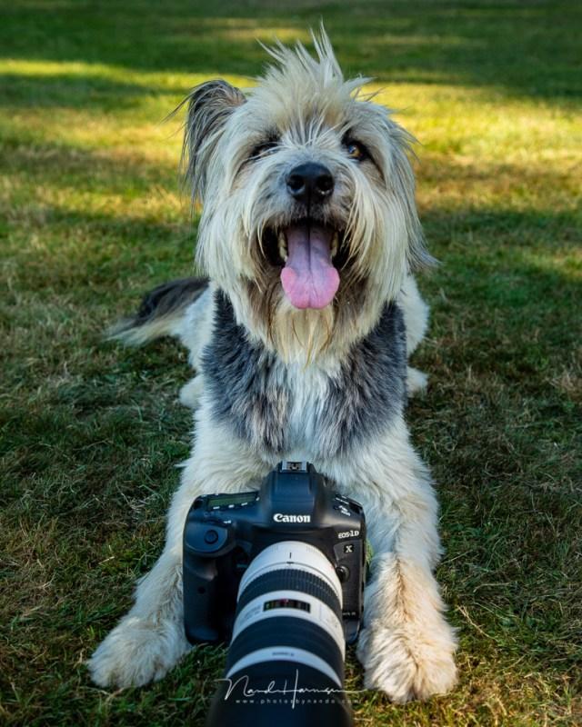 honden fotograferen met de Cnaon EOS 1Dx mk3. Onze bruc was een van de honden