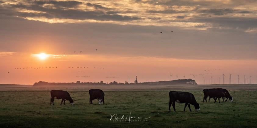 Een ochtend op het Groninger wad, met uitzicht op Eemshaven
