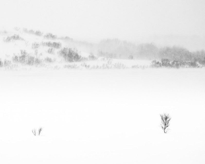 Landschappen fotograferen in zwartwit - Lofoten in een sneeuwstorm
