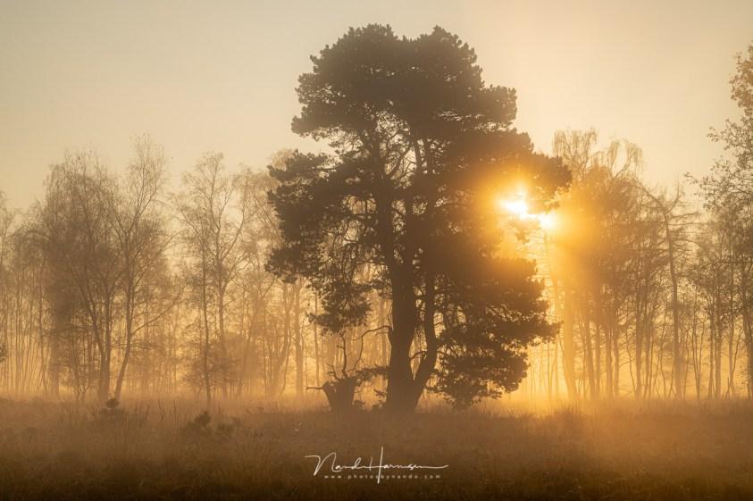 Twijfelachtige zonneharpen tijdens het landschappen fotograferen op een mistige ochtend