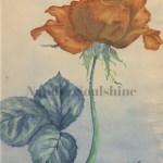 nandyzsoulshine.com