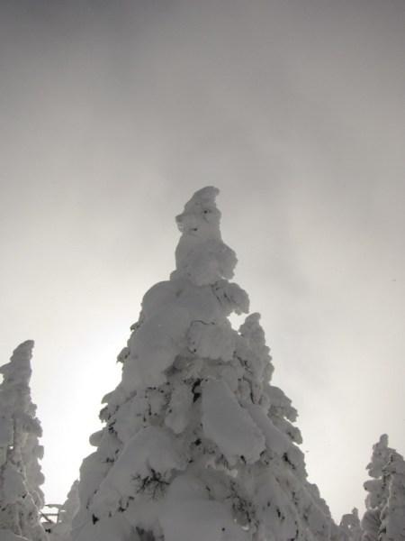 Frozen Trees in Shiga