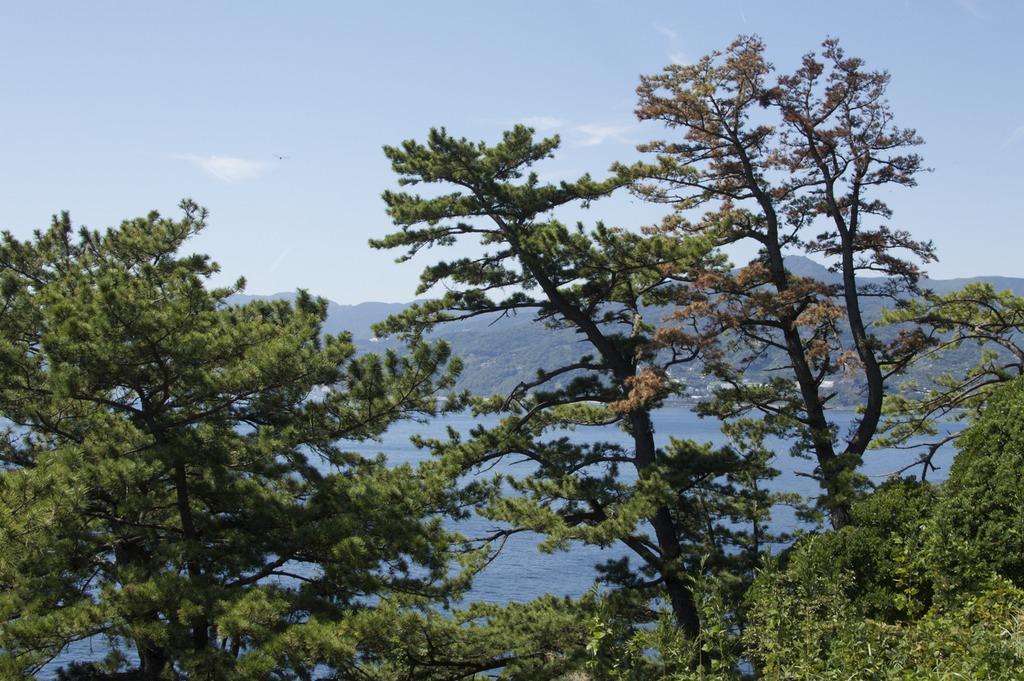 A view of the ocean through the trees of Manazuru